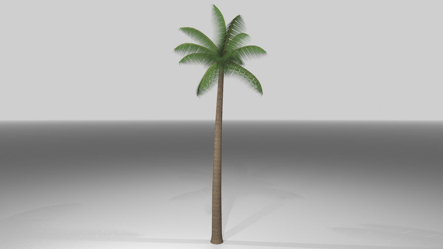 Palm Tree royalty-free 3d model - Preview no. 2