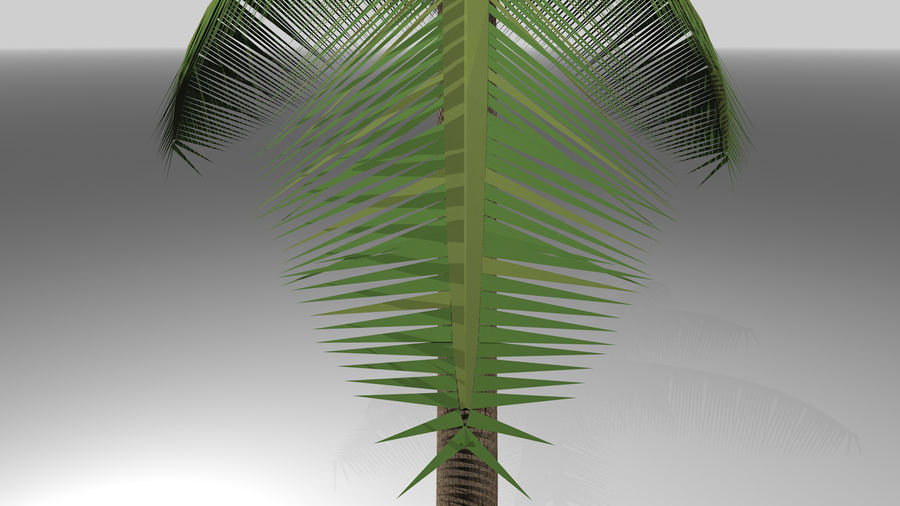 Palm Tree royalty-free 3d model - Preview no. 10
