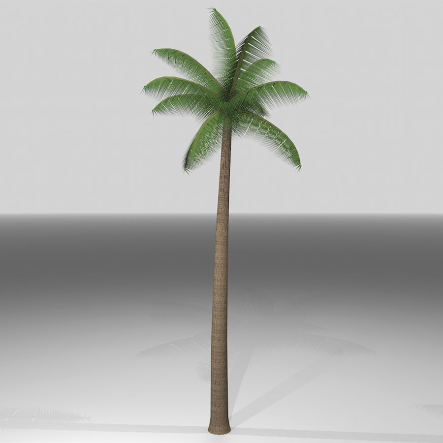 Palm Tree royalty-free 3d model - Preview no. 1
