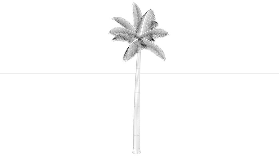 Palm Tree royalty-free 3d model - Preview no. 3