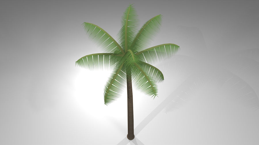 Palm Tree royalty-free 3d model - Preview no. 8