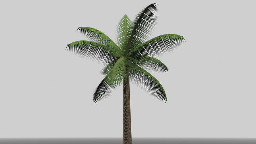 Palm Tree royalty-free 3d model - Preview no. 6