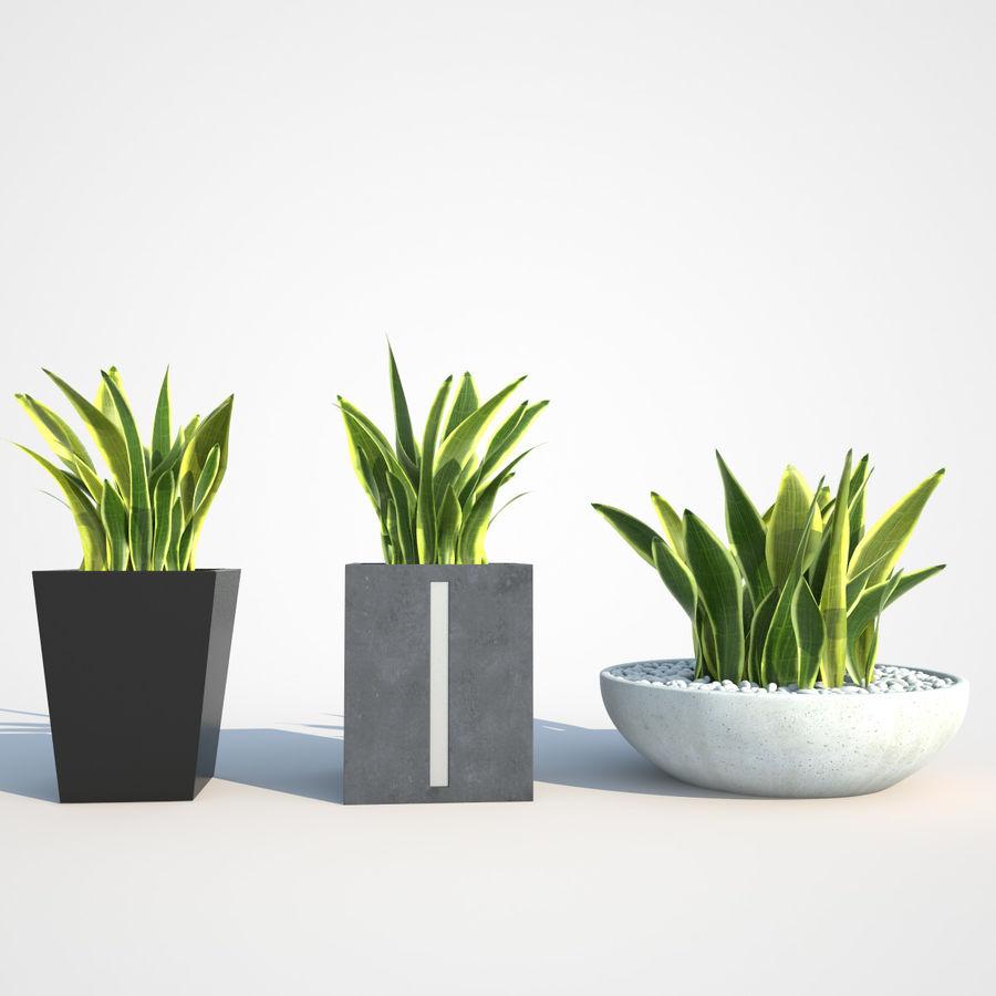 Plantas IV para interior y exterior royalty-free modelo 3d - Preview no. 6
