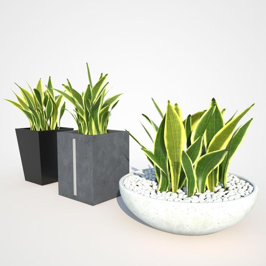 Plantas IV para interior y exterior royalty-free modelo 3d - Preview no. 4