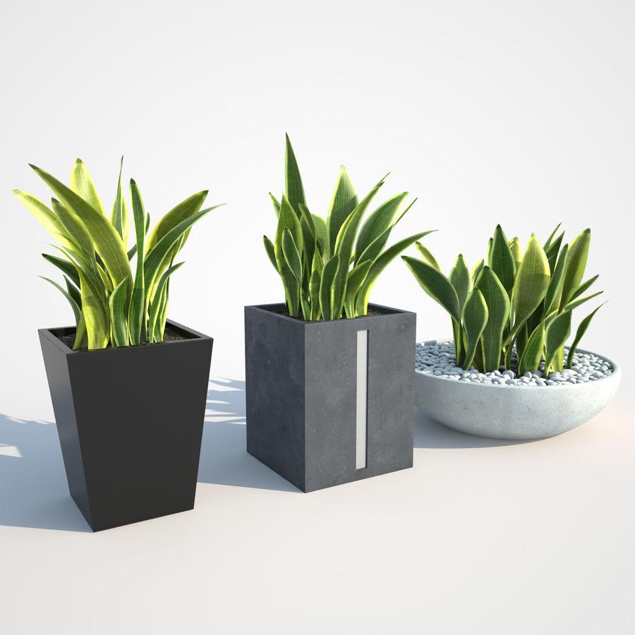 Plantas IV para interior y exterior royalty-free modelo 3d - Preview no. 3
