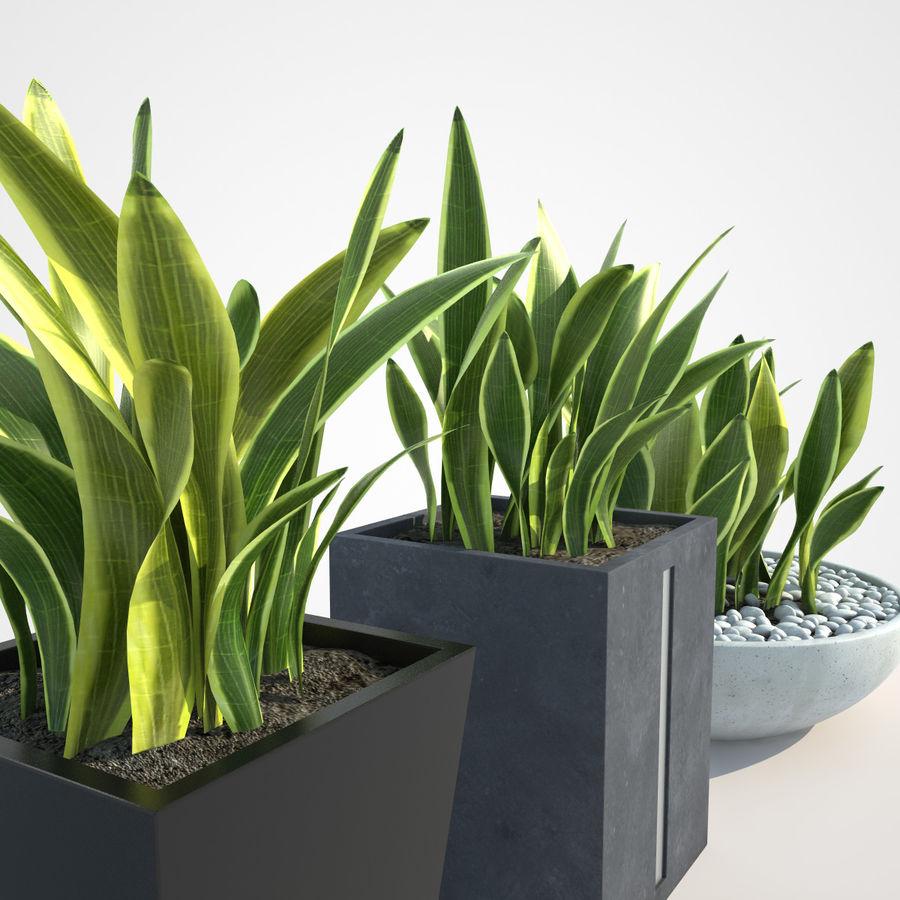 Plantas IV para interior y exterior royalty-free modelo 3d - Preview no. 2