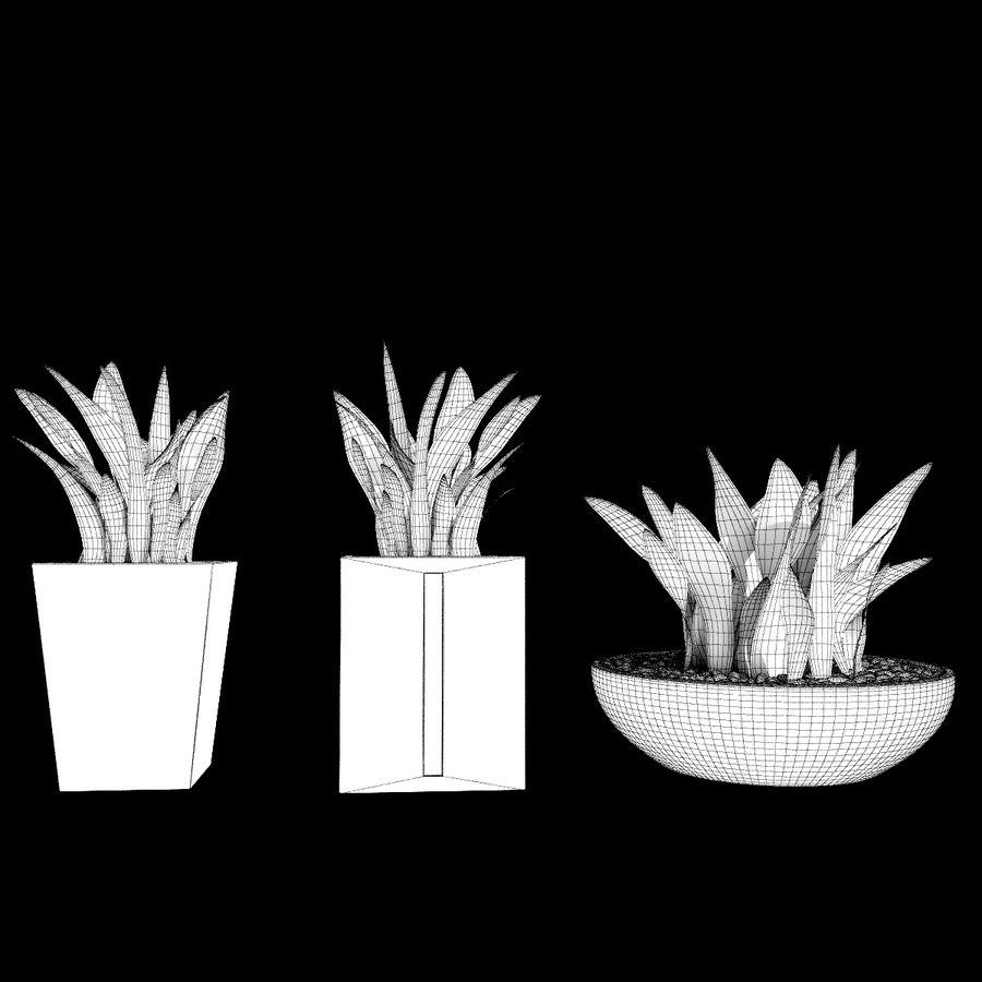Plantas IV para interior y exterior royalty-free modelo 3d - Preview no. 9