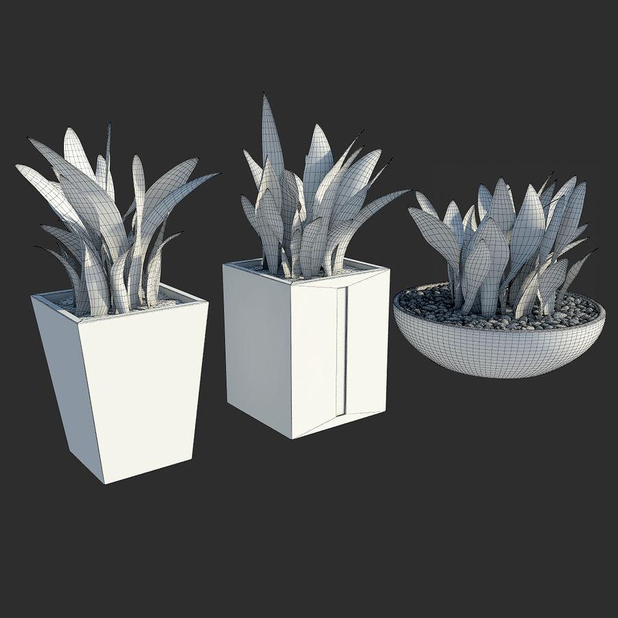 Plantas IV para interior y exterior royalty-free modelo 3d - Preview no. 7