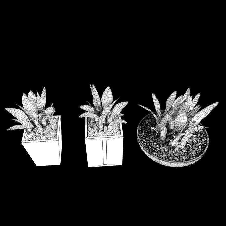Plantas IV para interior y exterior royalty-free modelo 3d - Preview no. 10