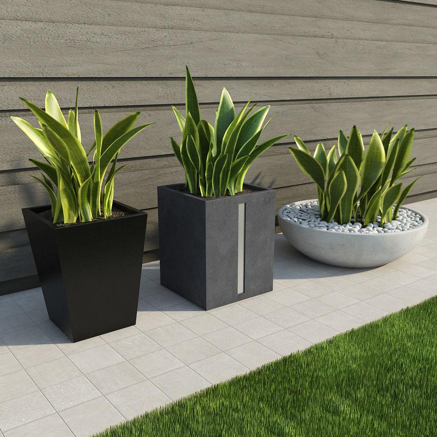 Plantas IV para interior y exterior royalty-free modelo 3d - Preview no. 1