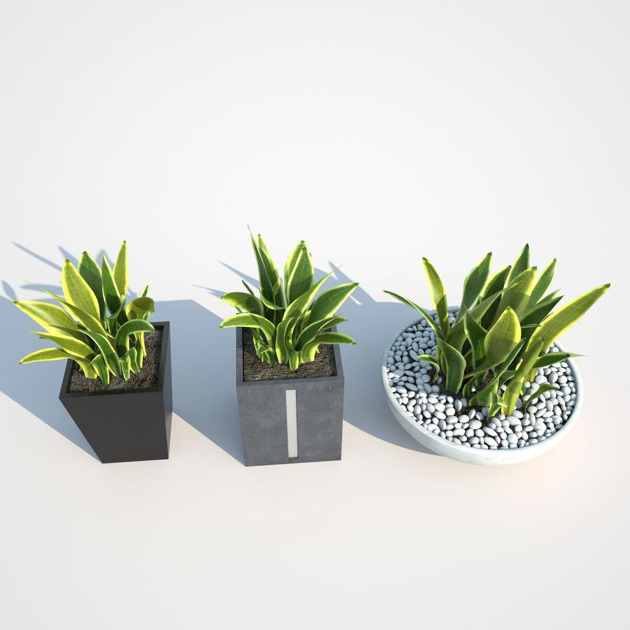 Plantas IV para interior y exterior royalty-free modelo 3d - Preview no. 5