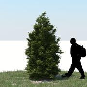 튀자 나무 08 3d model
