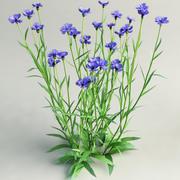 수레 국화과 Centaurea cyanus 3d model