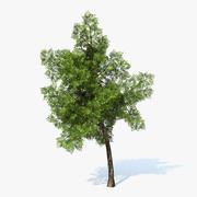 Generiskt träd 02 3d model