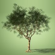 eucalyptus tree HQ model 3d model