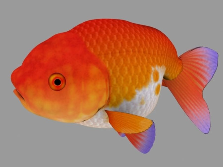 Akvaryum balığı royalty-free 3d model - Preview no. 1