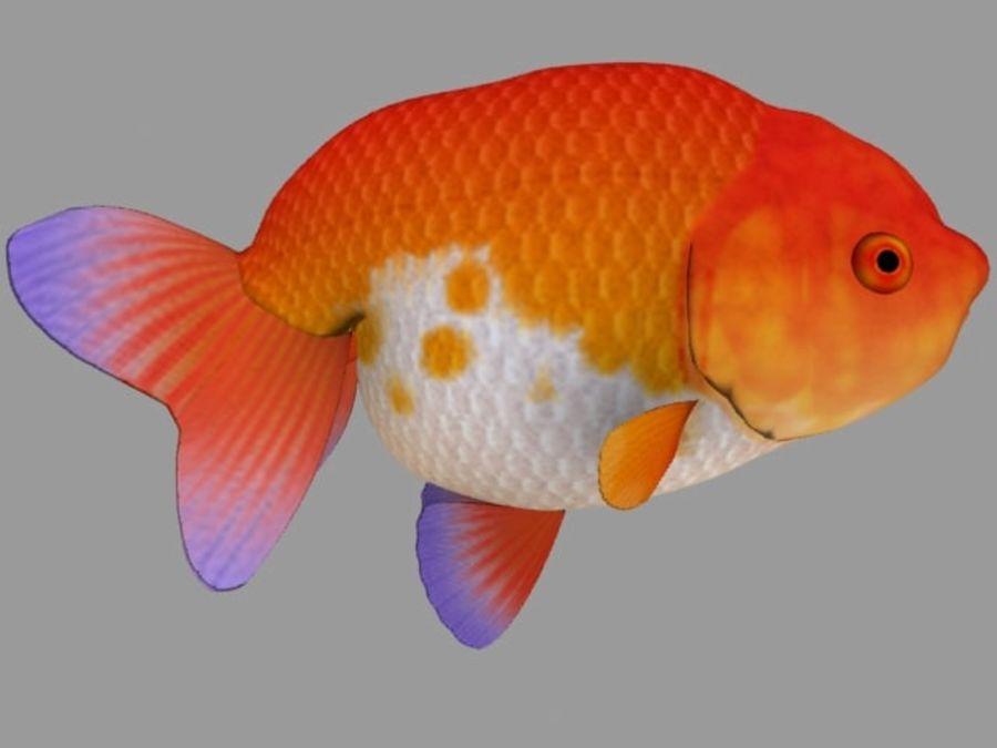 Akvaryum balığı royalty-free 3d model - Preview no. 10
