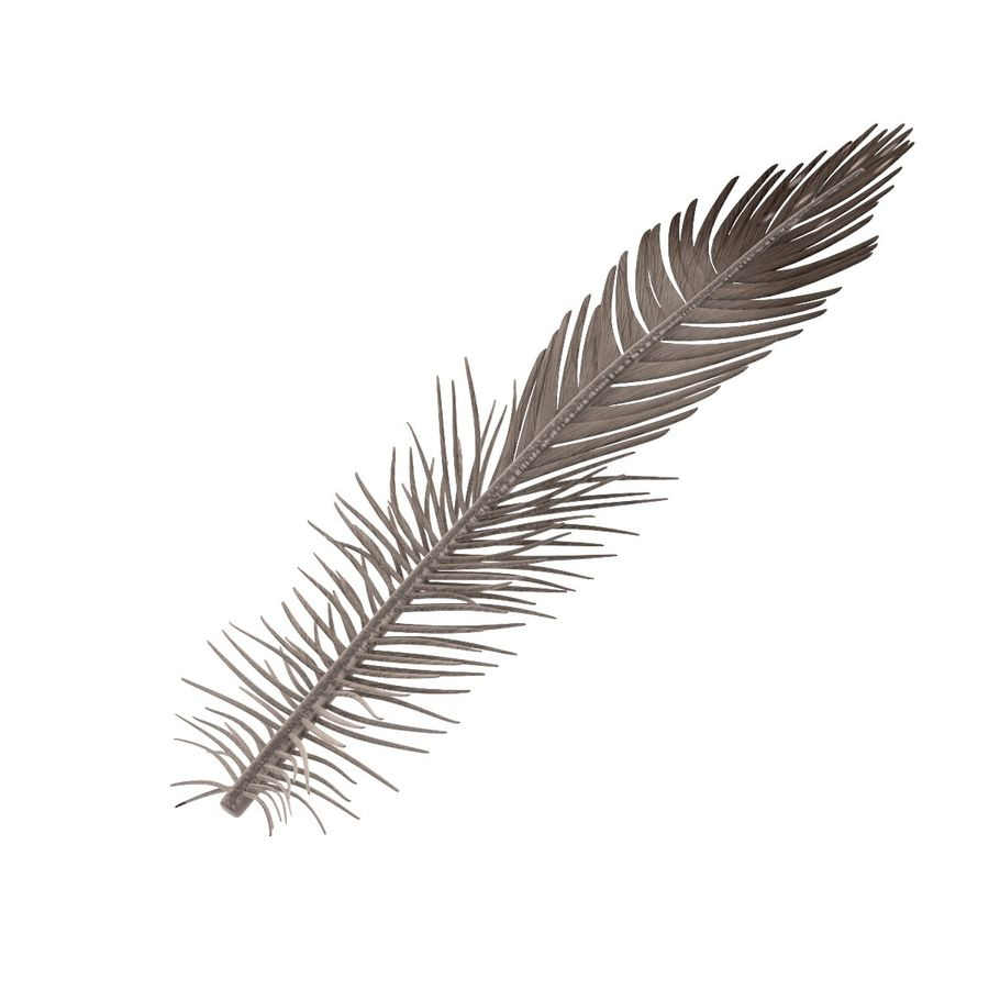 Feather royalty-free 3d model - Preview no. 3