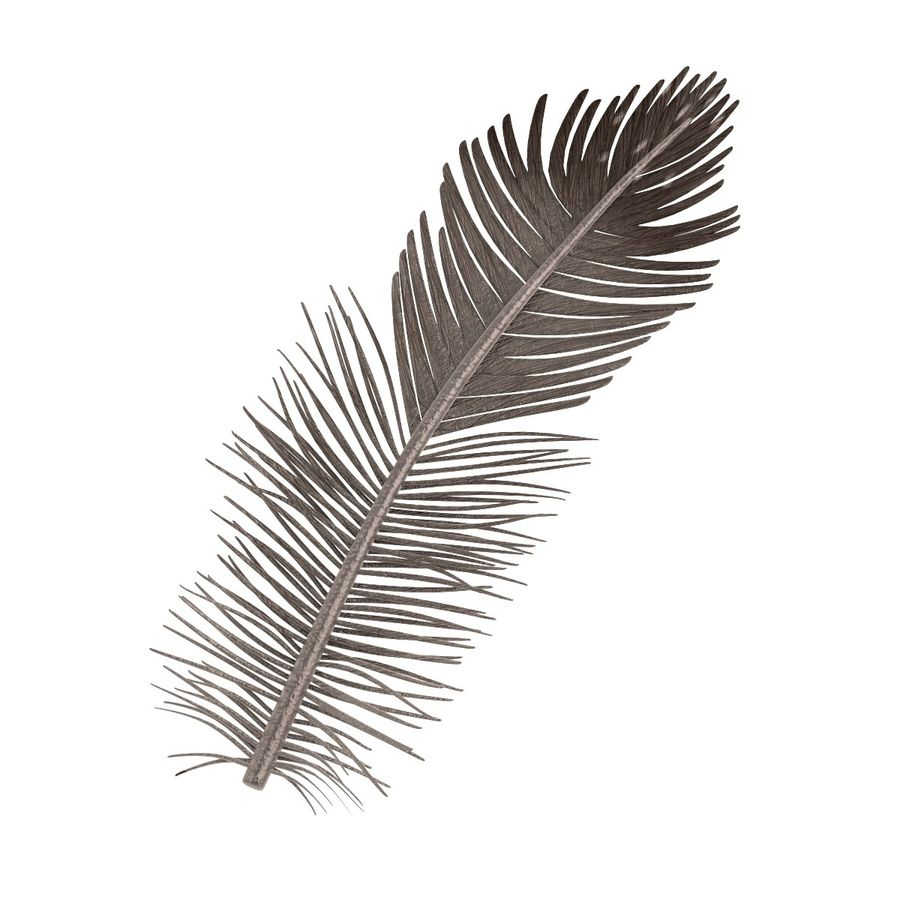 Feather royalty-free 3d model - Preview no. 2
