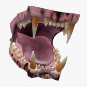 사자의 입 3d model