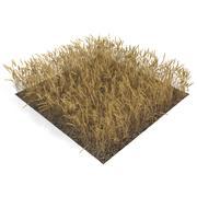 Campo di grano 3d model