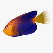Pesce angelo nano di Interuptus 3d model
