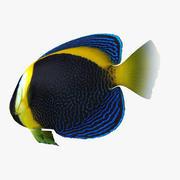 Kritzelte Angelfish 3d model