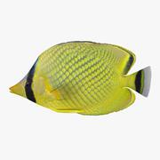 Vergitterter Falterfisch 3d model