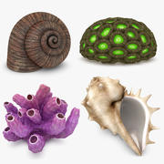 Shell & Coral Collection 3d model