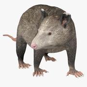 Possum Pose 2 3d model