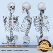 Scheletro del torso 3d model