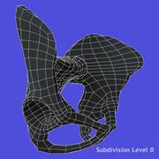 Leğen kemiği 3d model