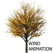 Осеннее дерево Acer с анимацией ветра 3d model