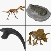 Fossil Collection 3d model