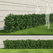 Hedge III 3d model