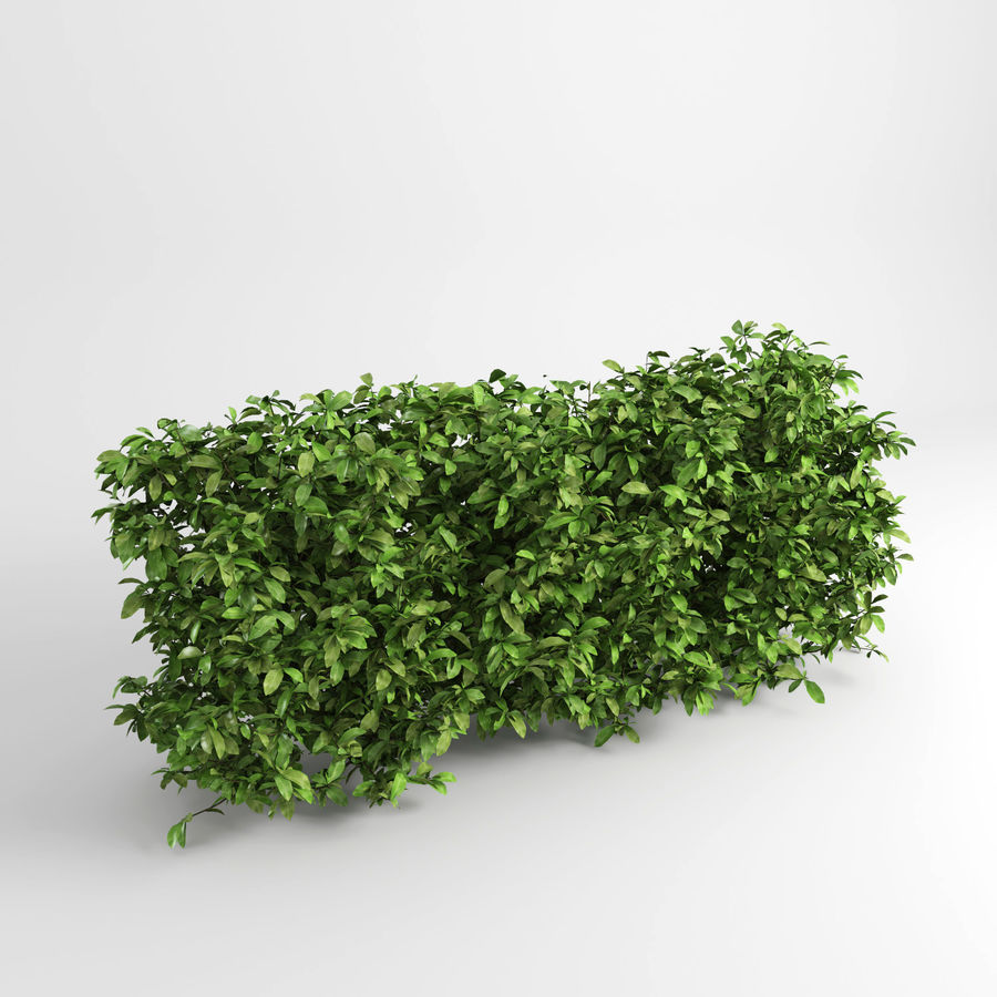 Plantes de couverture royalty-free 3d model - Preview no. 3