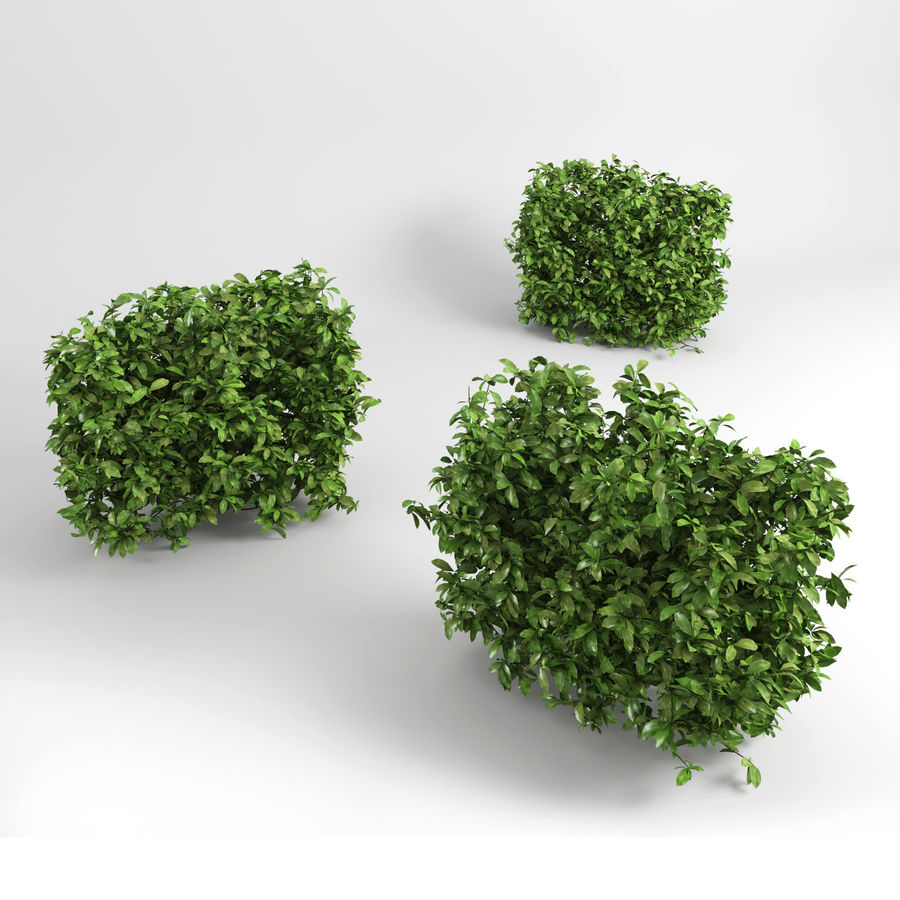 Hedging Plants royalty-free 3d model - Preview no. 5
