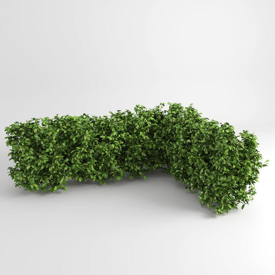 Hedging Plants royalty-free 3d model - Preview no. 4