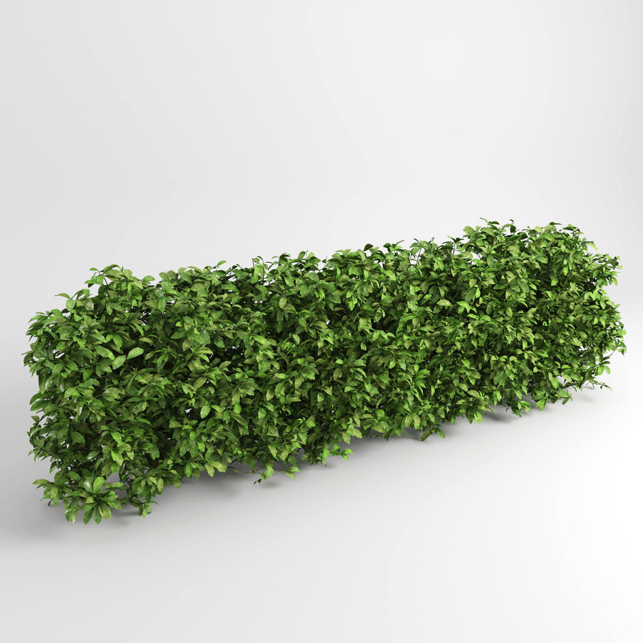 Plantes de couverture royalty-free 3d model - Preview no. 2