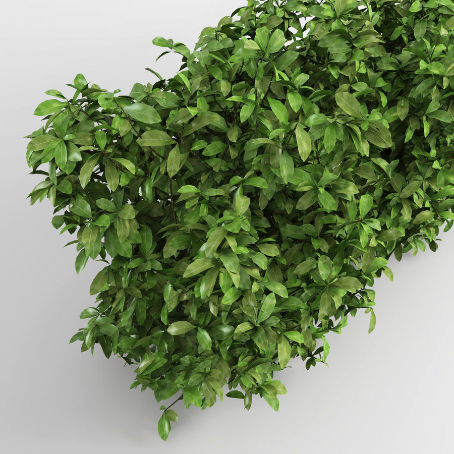 Plantes de couverture royalty-free 3d model - Preview no. 6