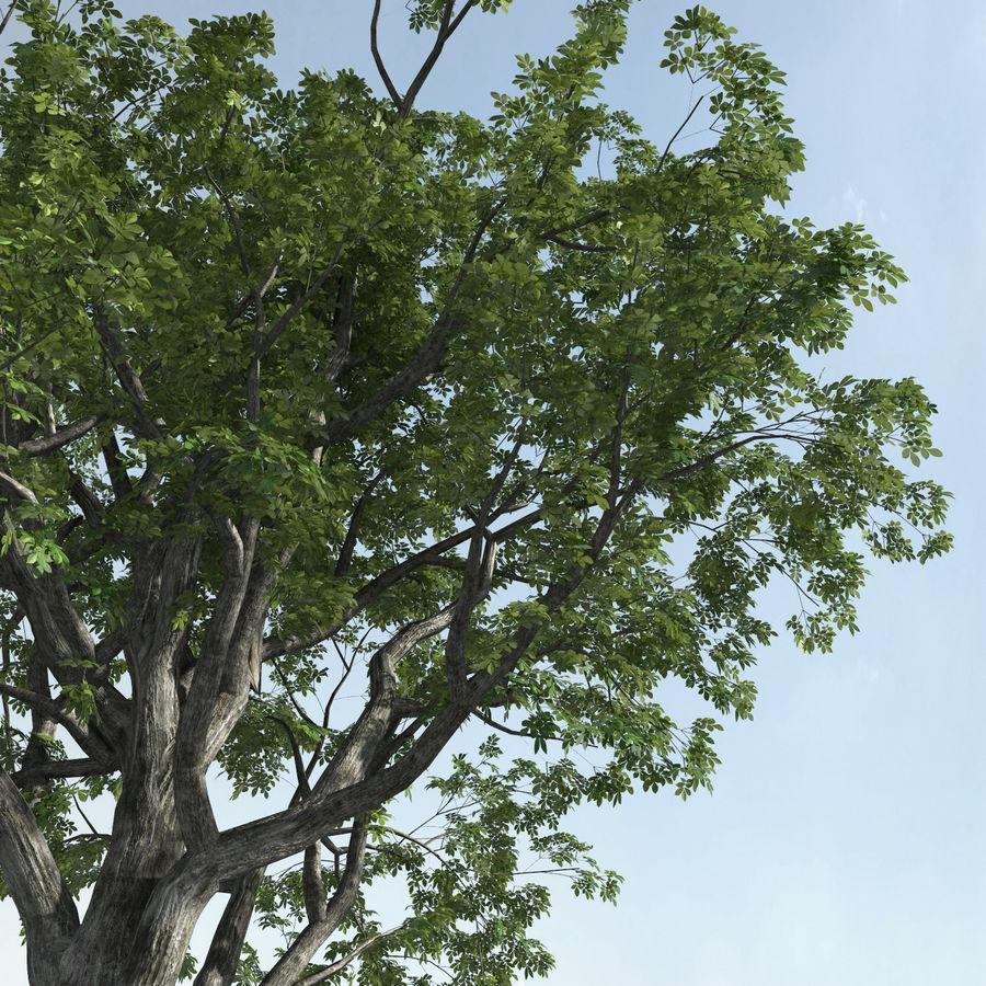 Three Season Trees 2 (+GrowFX) royalty-free 3d model - Preview no. 4