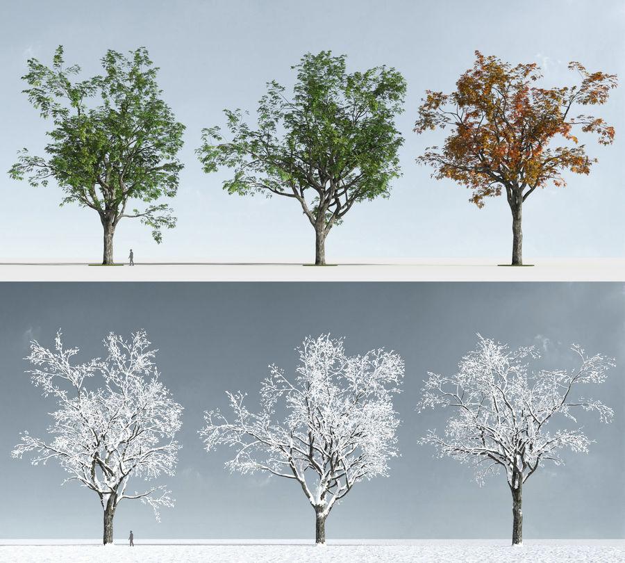 Three Season Trees 2 (+GrowFX) royalty-free 3d model - Preview no. 8