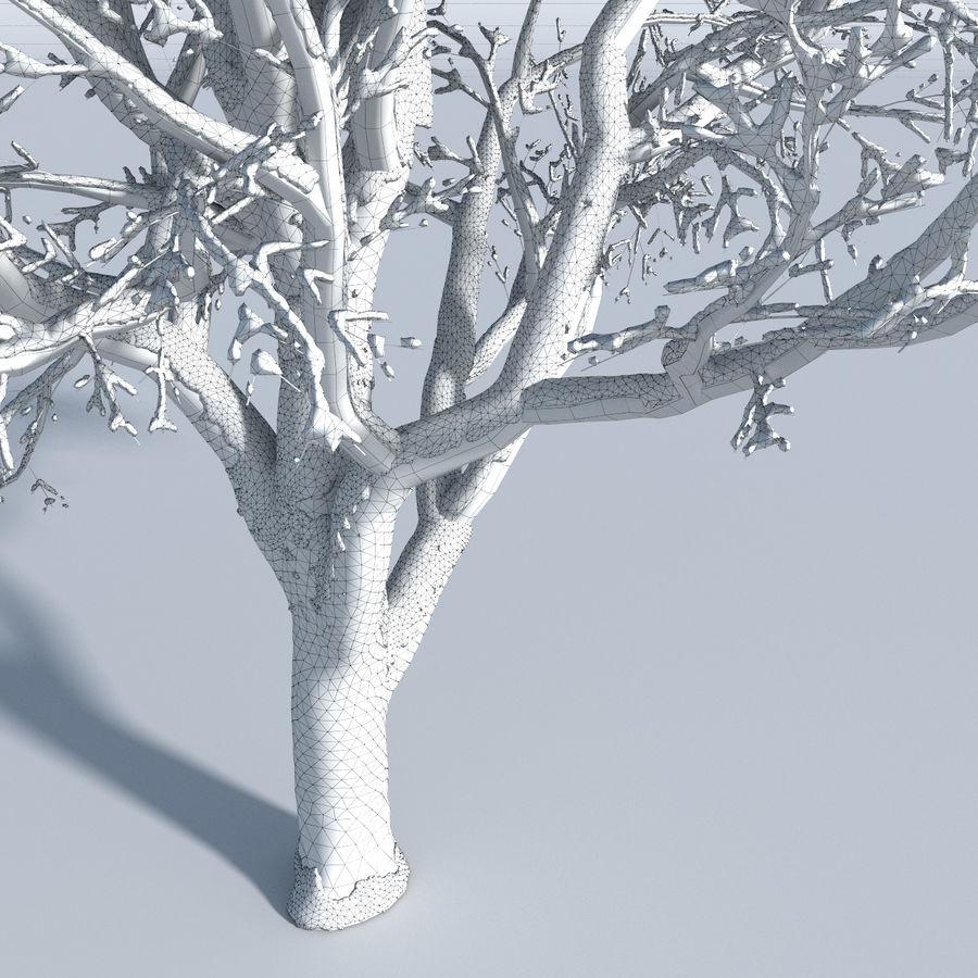 Three Season Trees 2 (+GrowFX) royalty-free 3d model - Preview no. 12