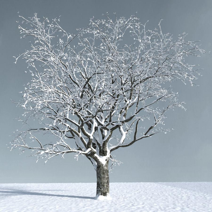 Three Season Trees 2 (+GrowFX) royalty-free 3d model - Preview no. 5