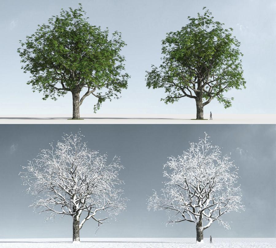 Three Season Trees 2 (+GrowFX) royalty-free 3d model - Preview no. 6