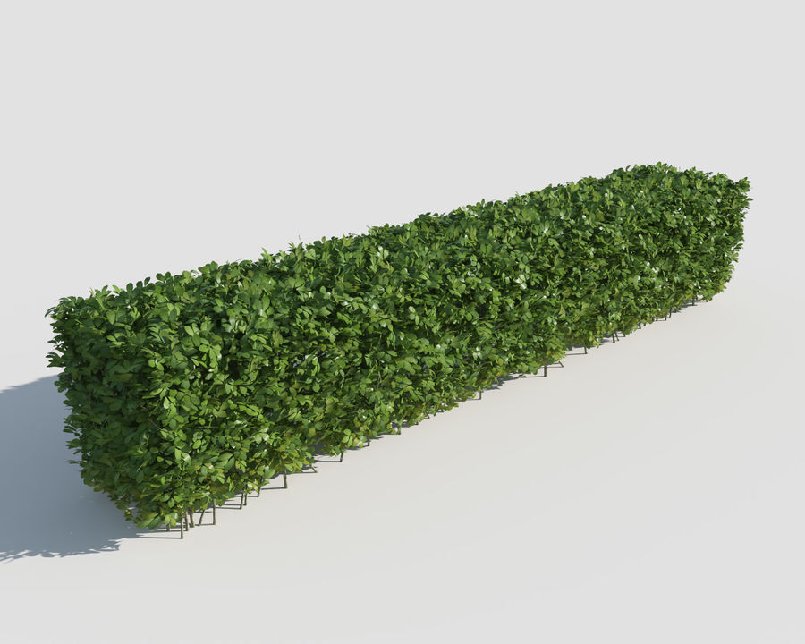 Trimmed Hedges Collection royalty-free 3d model - Preview no. 3