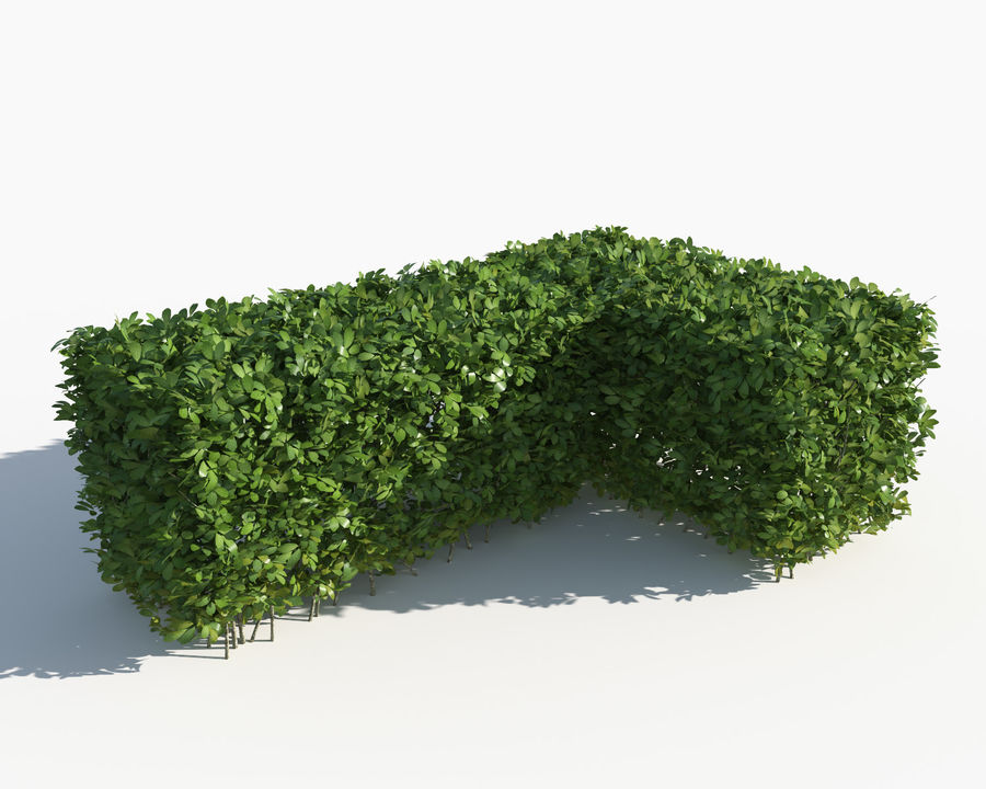 Trimmed Hedges Collection royalty-free 3d model - Preview no. 6