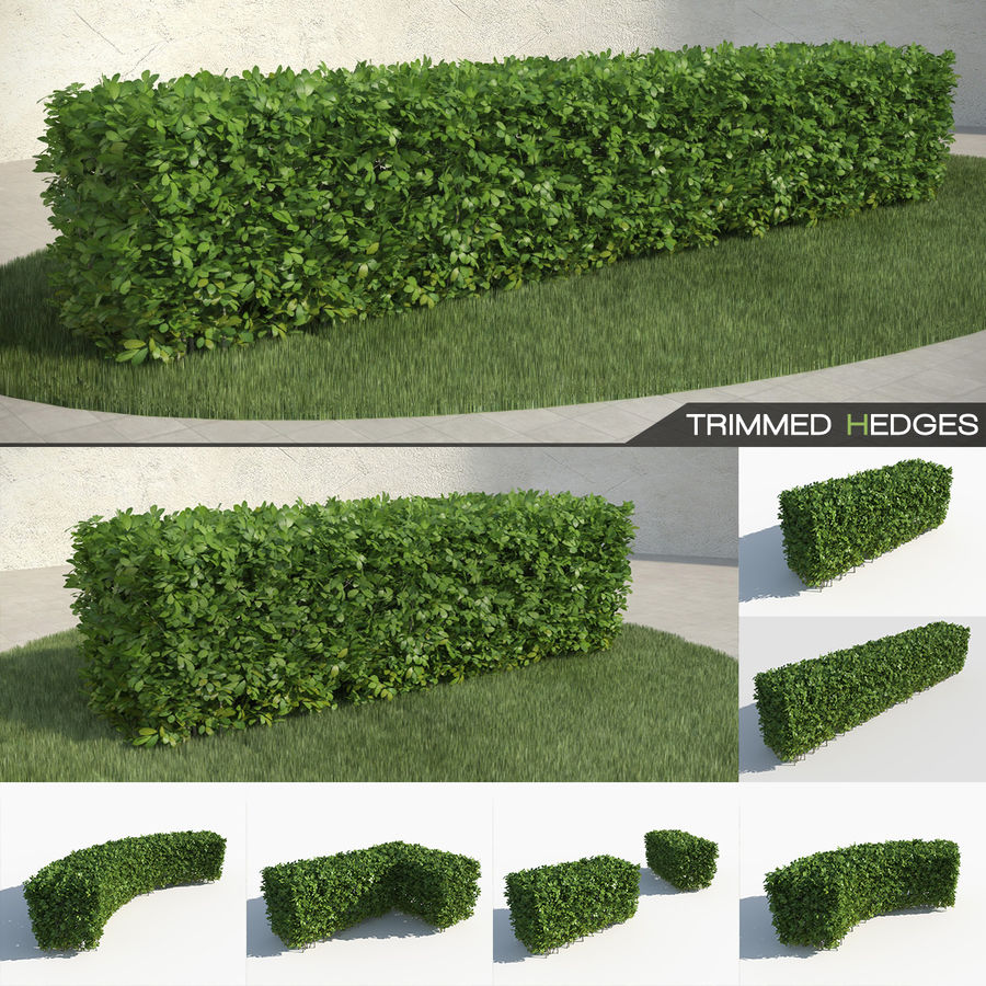 Trimmed Hedges Collection royalty-free 3d model - Preview no. 1