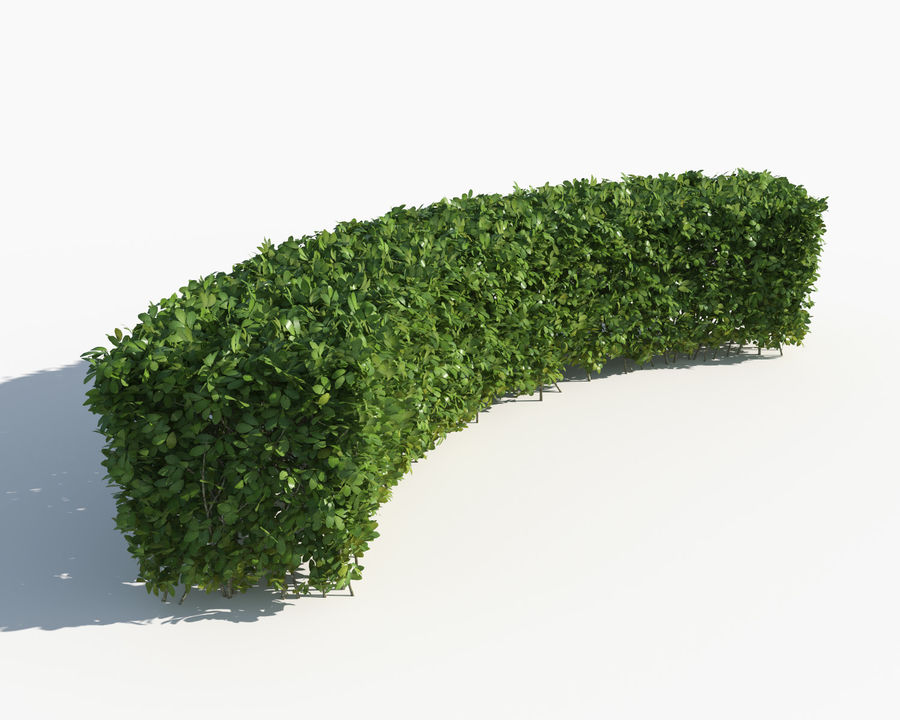 Trimmed Hedges Collection royalty-free 3d model - Preview no. 7