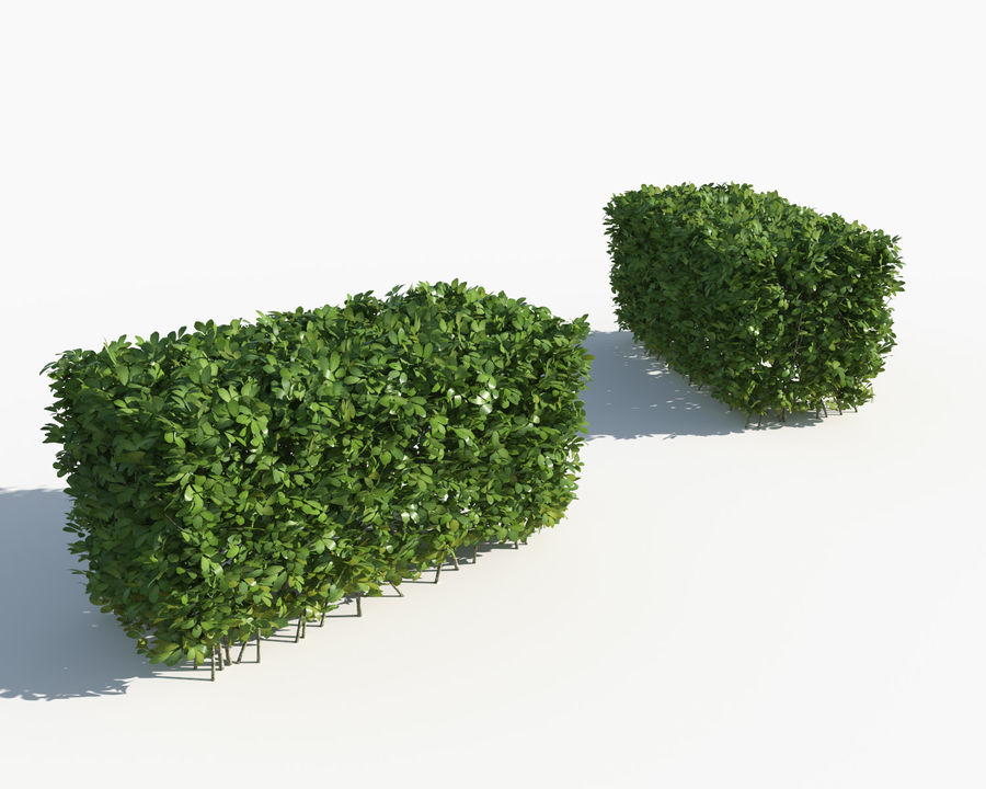 Trimmed Hedges Collection royalty-free 3d model - Preview no. 5